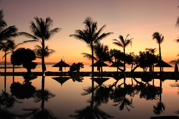 Palm trees in the evening on Bali